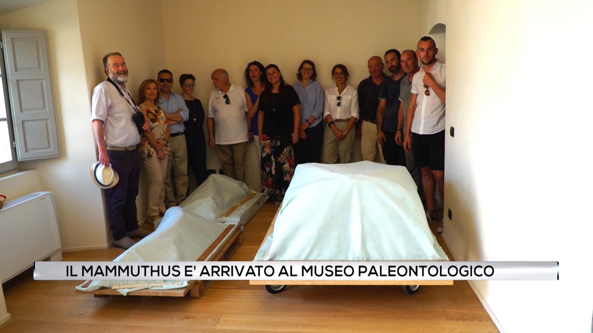 Il Mammuthus è arrivato al Museo Paleontologico