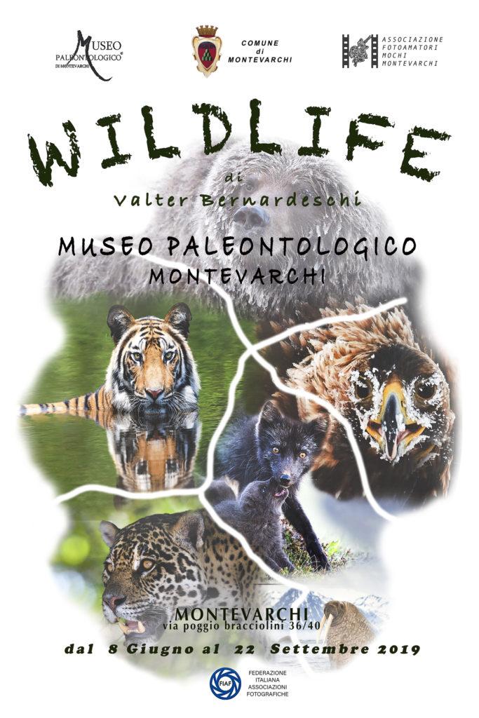 """Wildlife"" di Valter Bernardeschi"