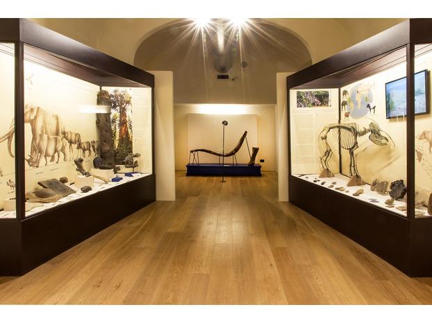 Riaperti il Museo Paleontologico e la Biblioteca Poggiana